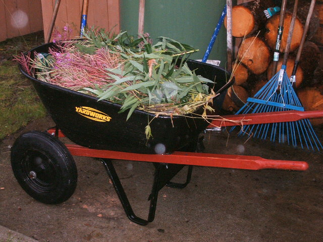 Here's what happens when you ignore deadheading duties for too long...you get a while wheelbarrow at once!